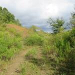 自然に囲まれた緑地帯(外観)